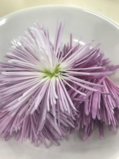 かきのもと(食用菊)