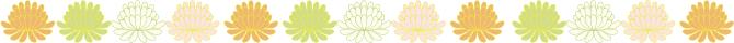 菊 ライン*カラー